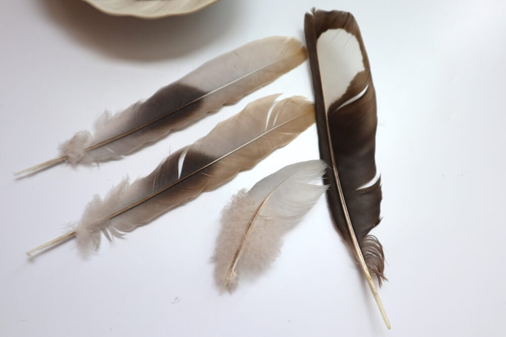 feathers for electroforming